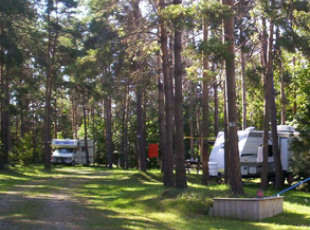 Pine Tree Leisure Camping